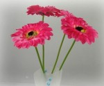 FD-04 Gerbera photo